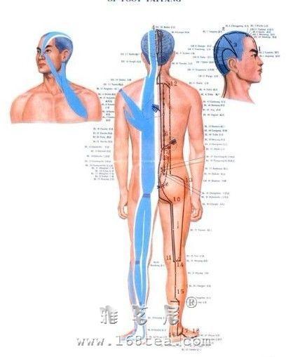 什么是筋?经筋的生理功能
