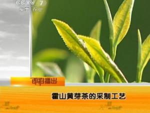 霍山黄芽种植生态环境