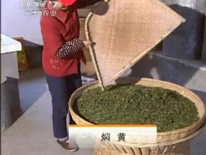 霍山黄芽茶的传统手工制作4:焖黄工艺