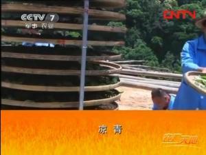 漳平水仙茶加工工艺3:凉青技术