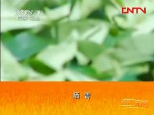 漳平水仙茶加工工艺2:晒青技术