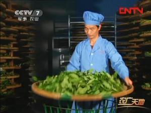 漳平水仙茶加工工艺4:摇青技术