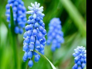 天然香料的种植、采摘、提取(文/项杨)