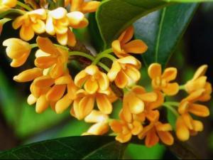 傅京亮:传统香和香有哪些常用香药?