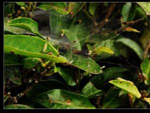 茶家寨茶园图片