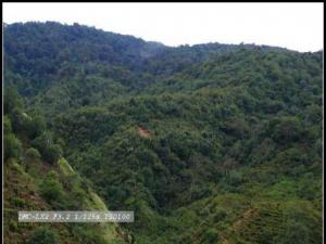 生态茶园茶家寨茶山图片