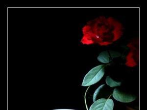 武夷岩茶摄影作品